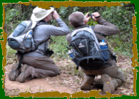 Birders enjoying the jungle and its birds